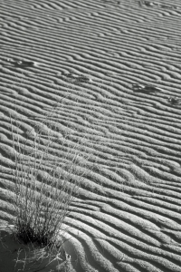 B_White Sands